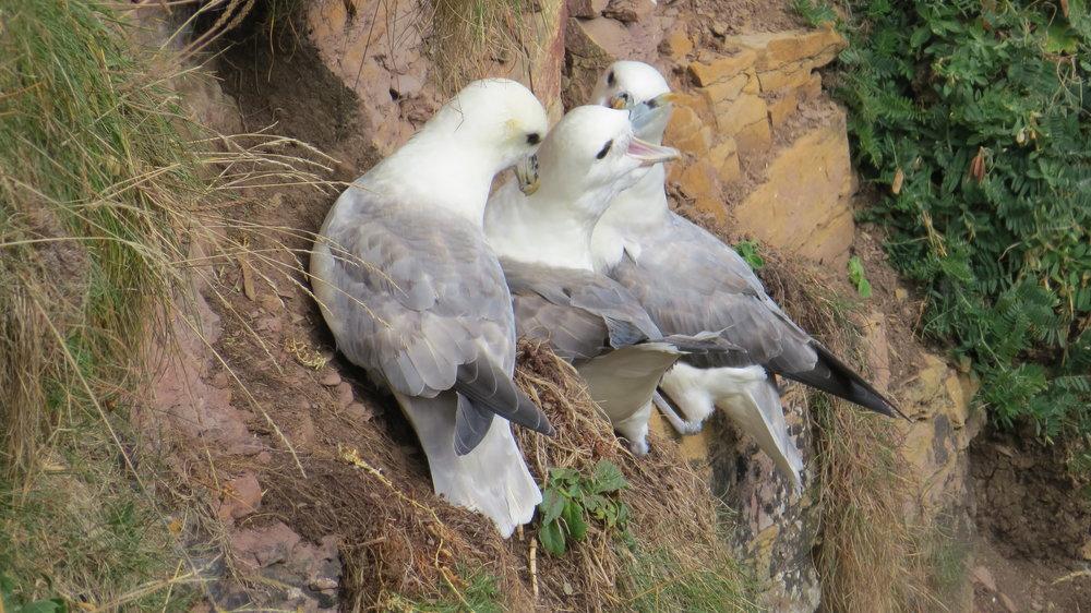 Gulls on Cliff
