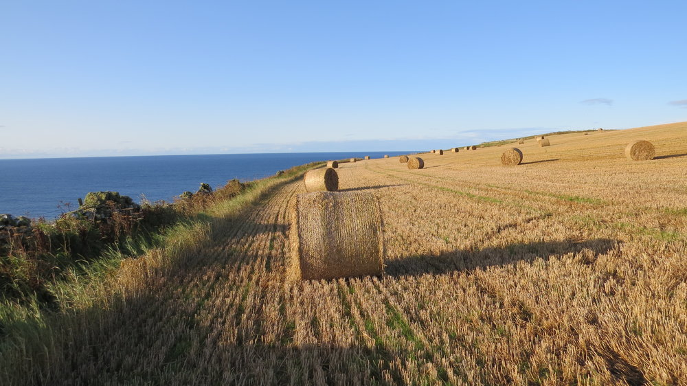 Cut Fields make for nice Walking