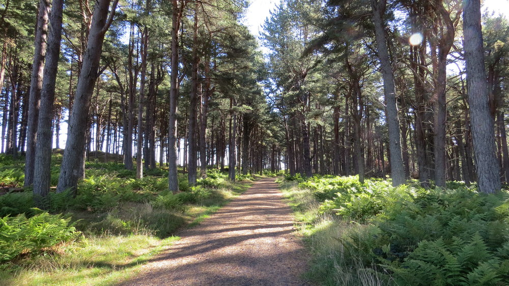 Tentsmuir Wood