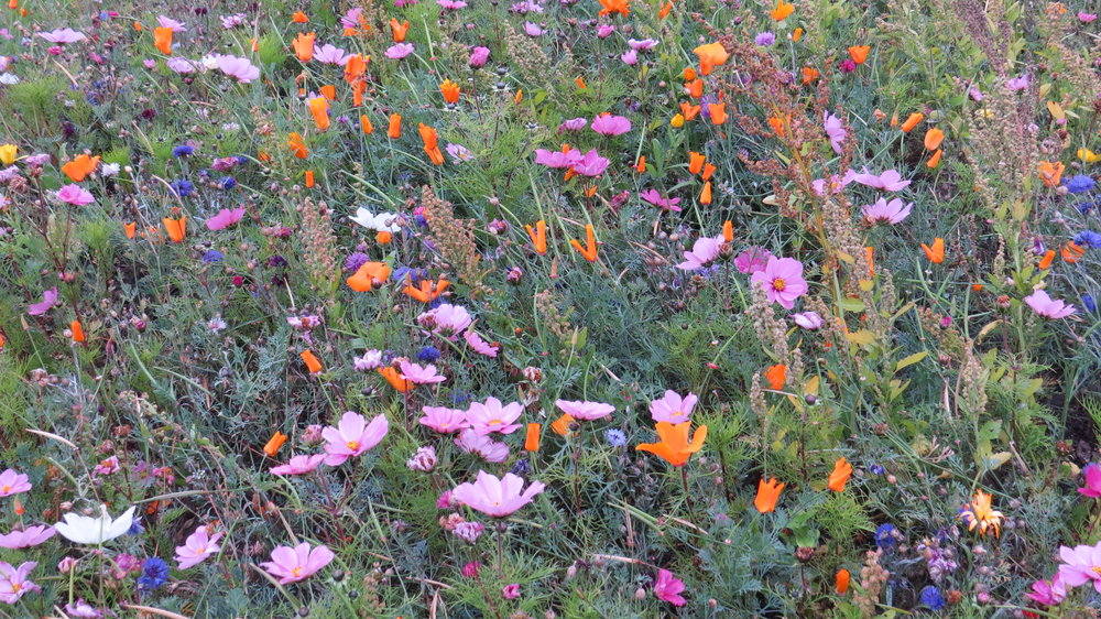 Last of the Wild Flower Meadows