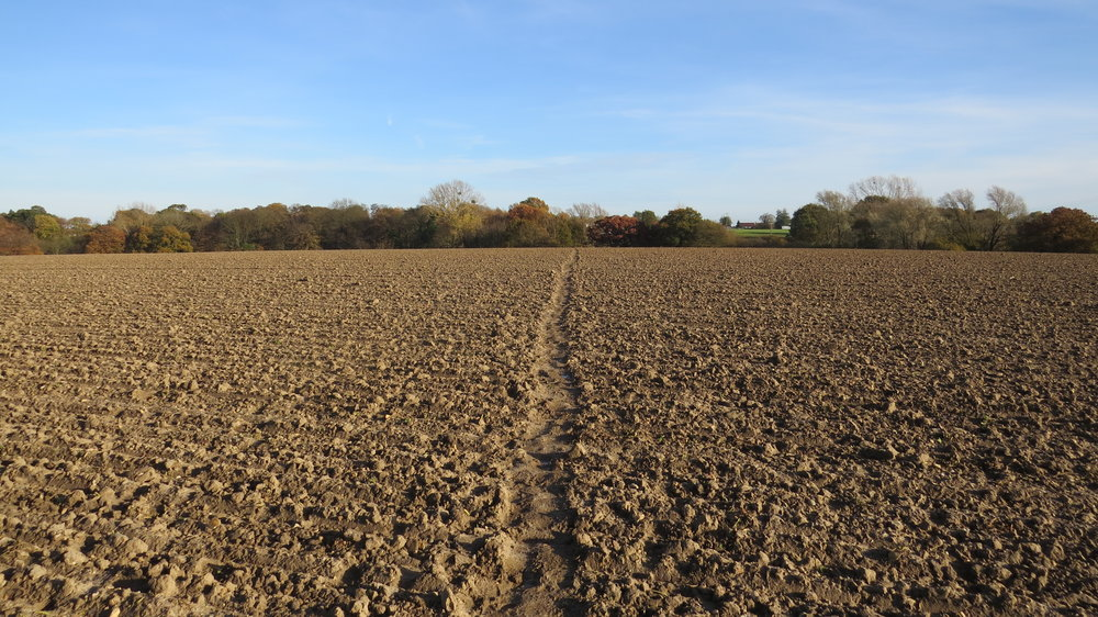 Walking over Ploughed Field