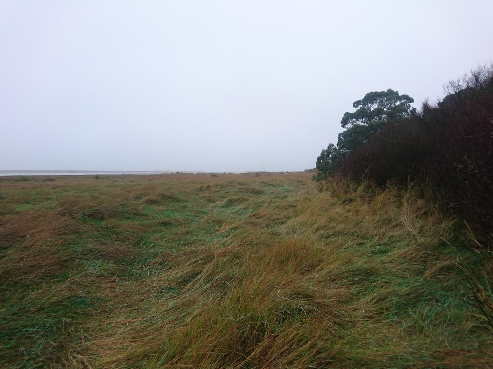 Wet, Marshland Walking Point Clear