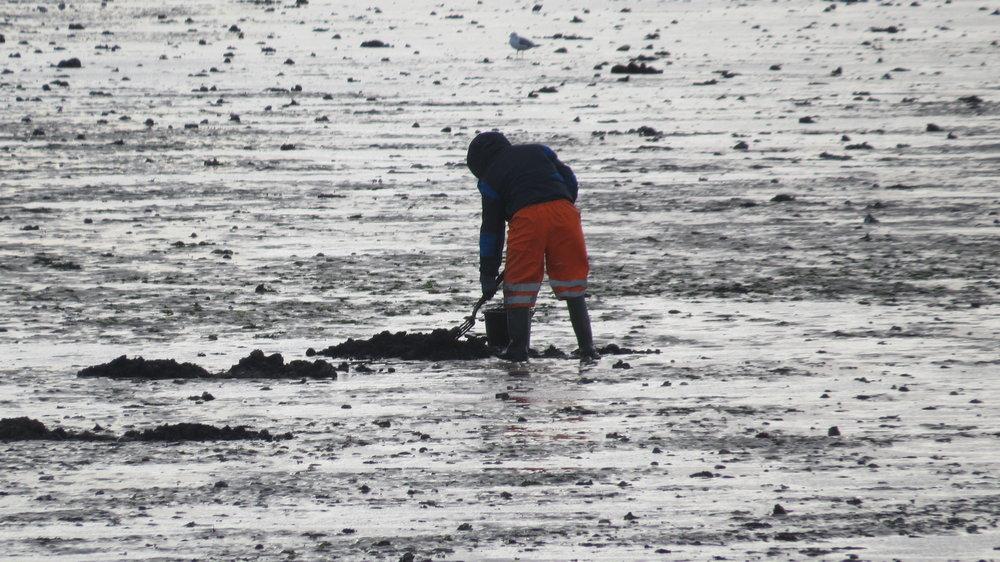 Worm Digging
