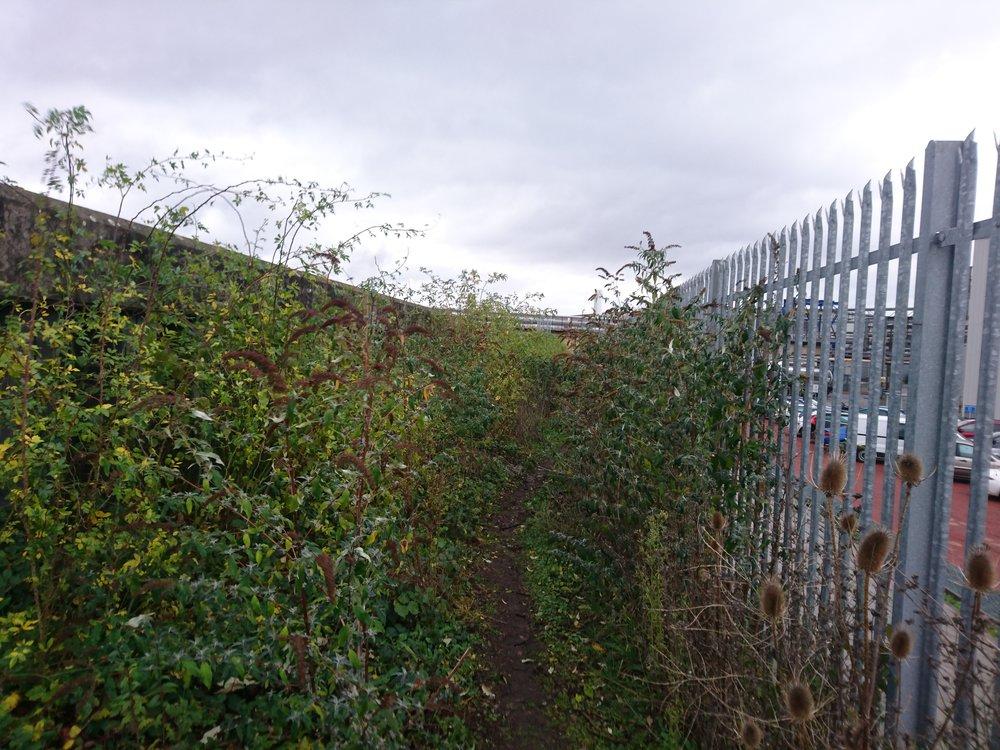 Slightly overgrown Path