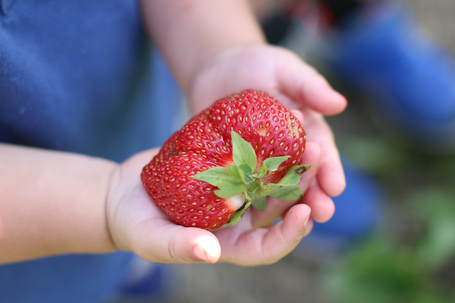 child-holding-strawberry.jpg