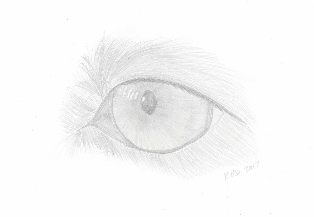 Loca's Eye