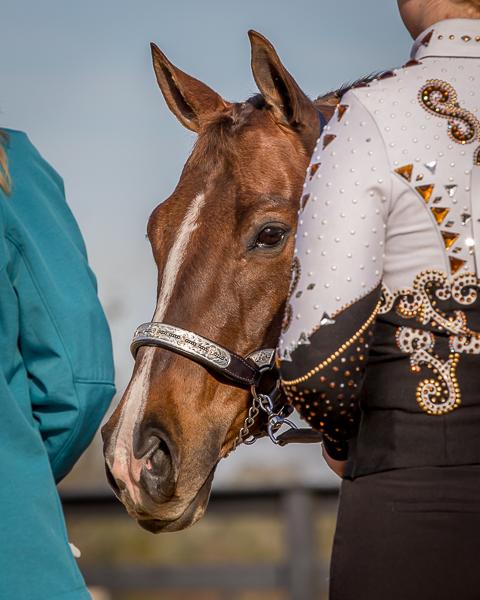 horse show photos.jpg