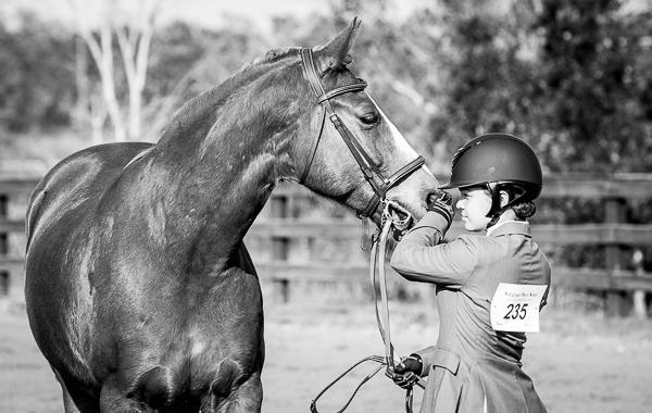 horse photographs.jpg