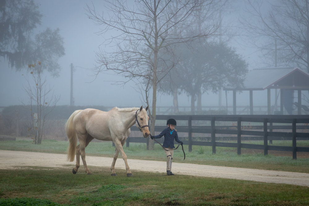 Florida Horse Photographer