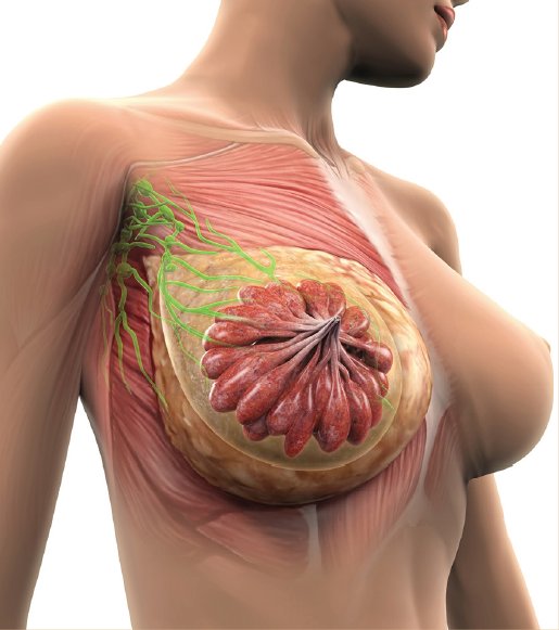 - Our signature procedure is the DIEP flap (Tummy Tuck Breast Reconstruction). This is a highly specialized and advanced method of breast reconstruction performed by less than 2% of all plastic surgeons in the country on a regular basis. In this method, we perform a tummy tuck like procedure. Rather than discarding the excess skin and fat from the abdomen like a cosmetic tummy tuck, we meticulously dissect the blood vessels which are normally cut. These tiny vessels (also known as perforators), are the size of a tip of a pencil, and provide blood flow to the skin and fat. We then carefully remove the tissue and transplant it in the exact same location of the breast that was previously removed by a mastectomy. Under the microscope we hand sew the artery and the vein of the tummy tuck tissue into the vessels of the chest that were cut when the mastectomy was performed. The breast is then shaped to mimic the breasts that were lost through the mastectomy.