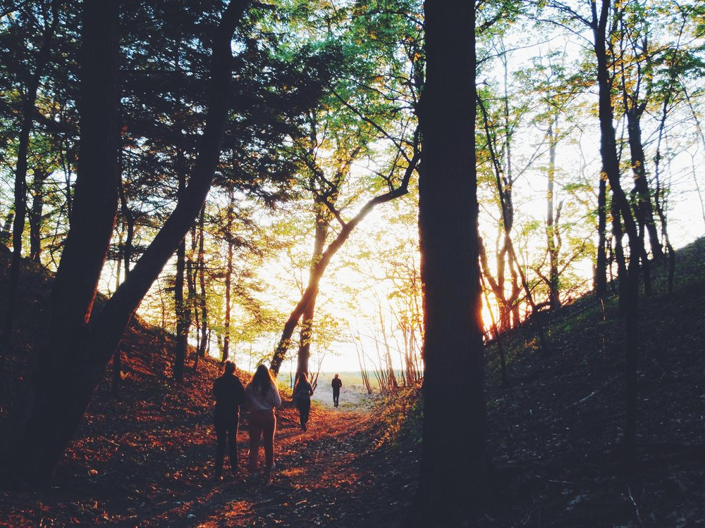 hiking sunset forest.jpg