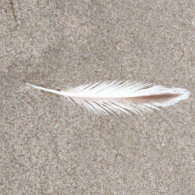 Praises for our triumphs are as feathers to a dead bird. -Paul Eldridge
