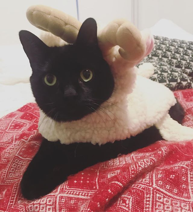 A cat in a sheep's clothing