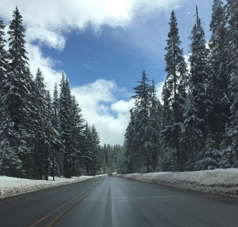 Driving through a winter wonderland. Image courtesy of Cameron Cesa.