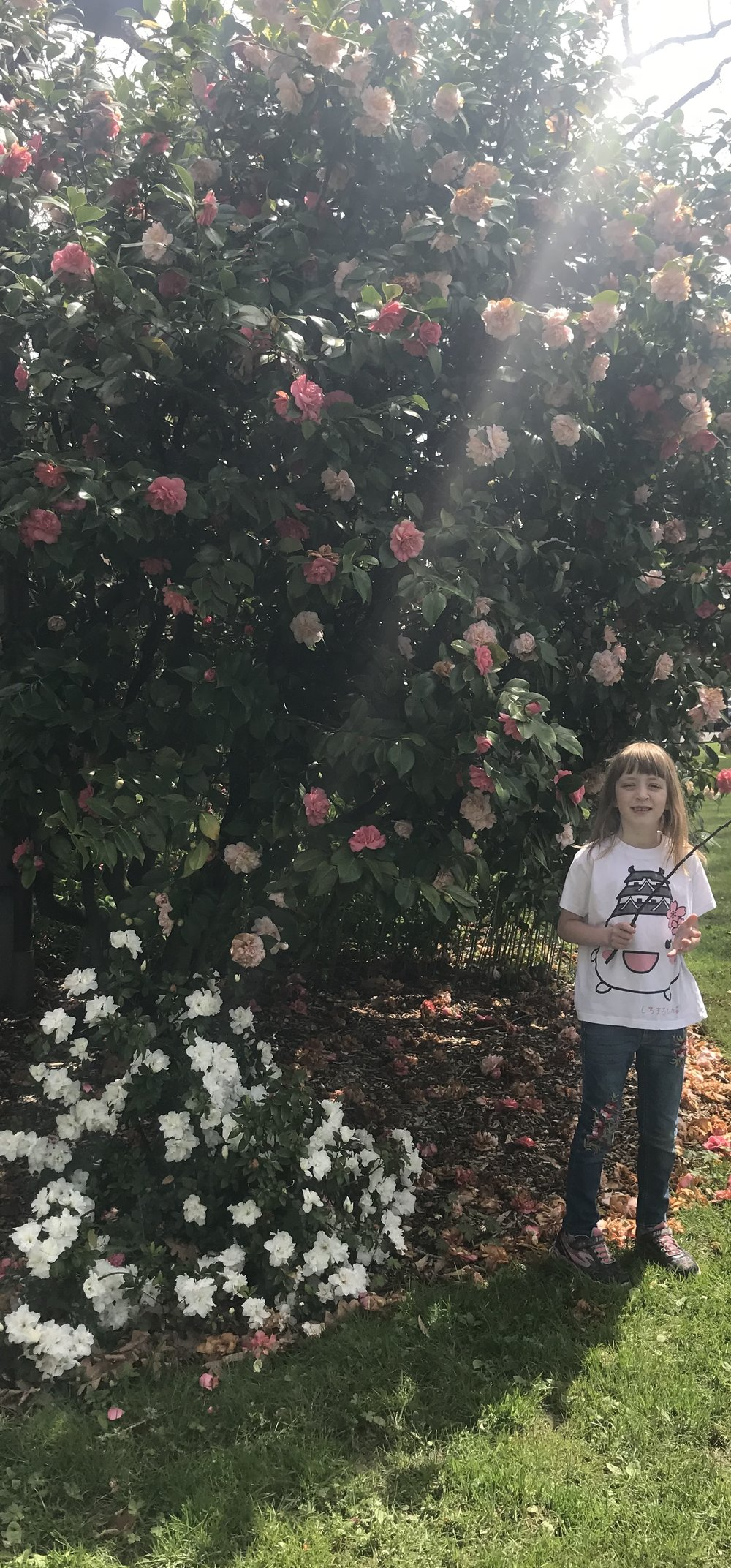 Ember and the roses. Photo courtesy of Gretchen Boyer.
