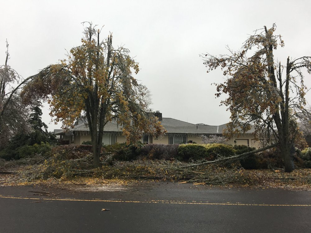 Removal of Storm Damaged Trees & Branches -