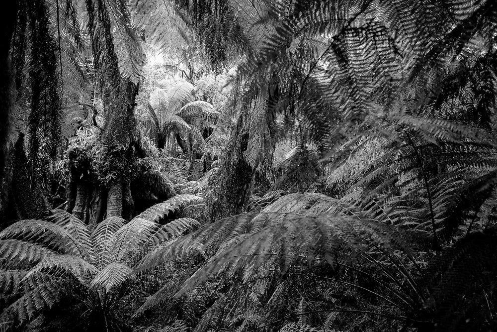 Rain Forest Australia