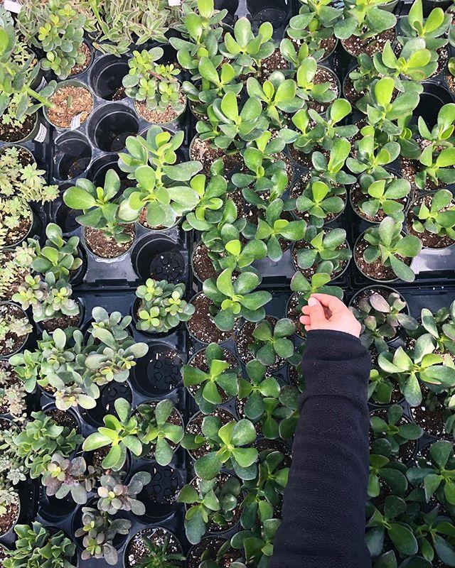 pick your plants 🌿🌱🌴 it's almost springtime