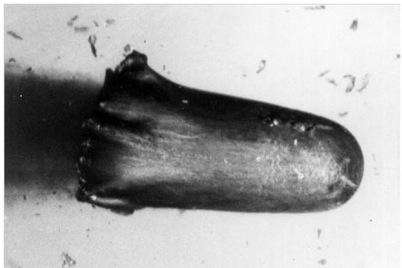 Figura 2. Fotografía sincro-secuencial de un penetrador formado explosivamente en vuelo    Fig. 2. Synchro-streak photograph of an explosively formed penetrator in flight