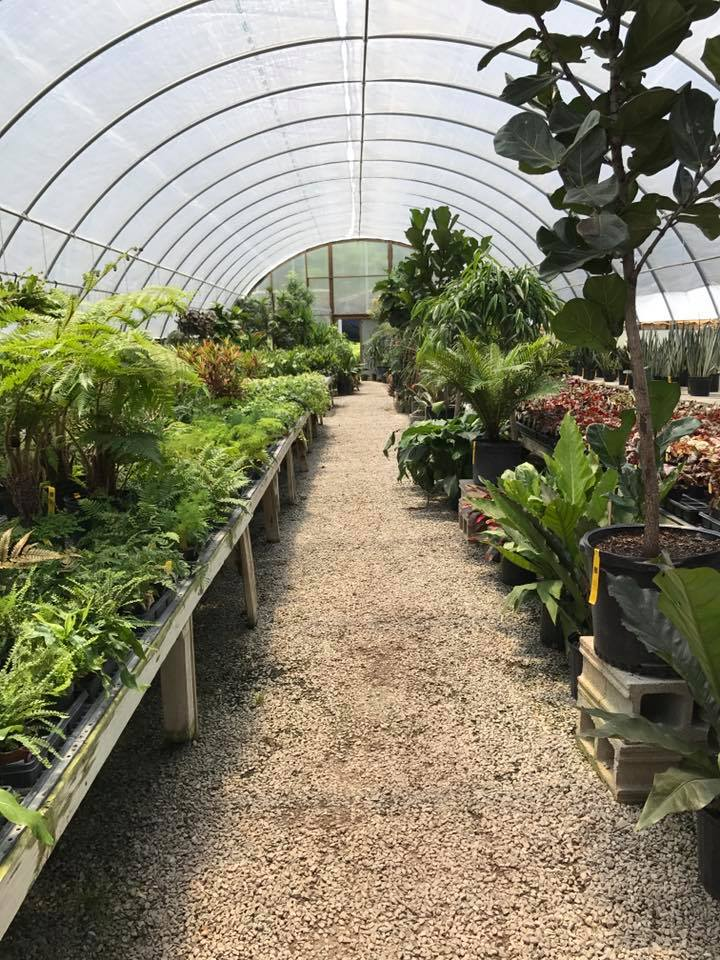 Even the best plant nurseries sometimes have sick or infested plants! Make sure you check plants before you bring them home.
