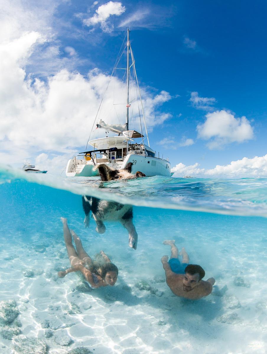 Swimming Pigs Exuma Bahamas Underwater