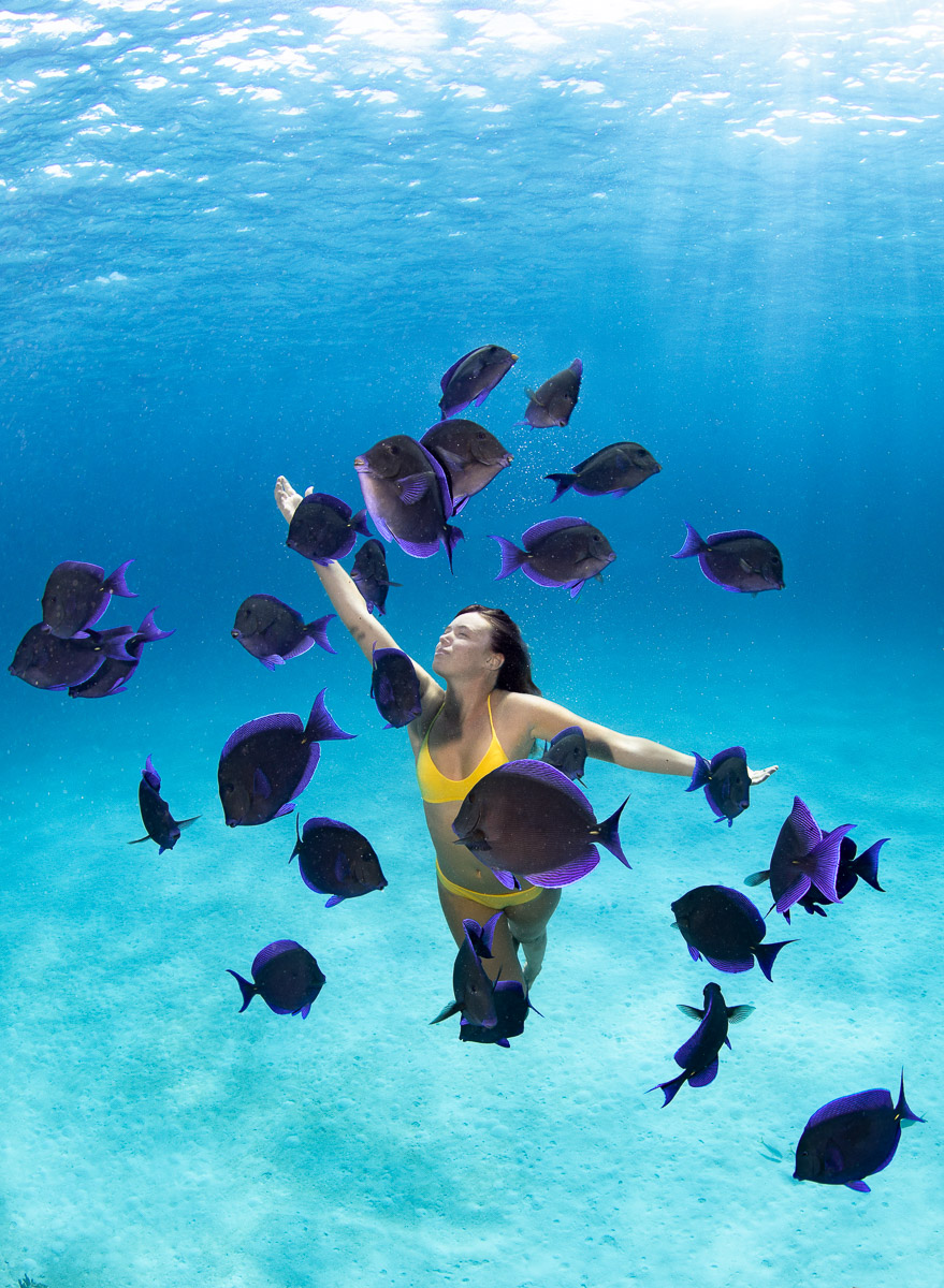 Swimming with Blue Tang Fish