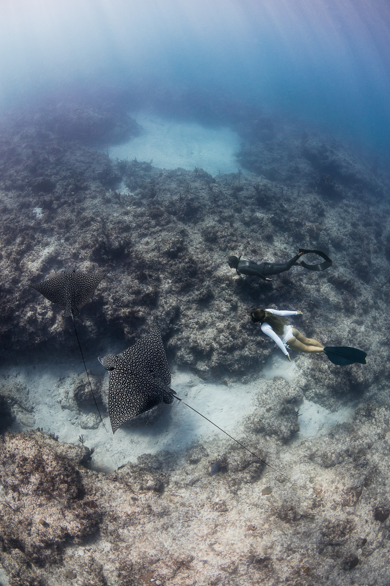 Freediving with eagle Rays underwater