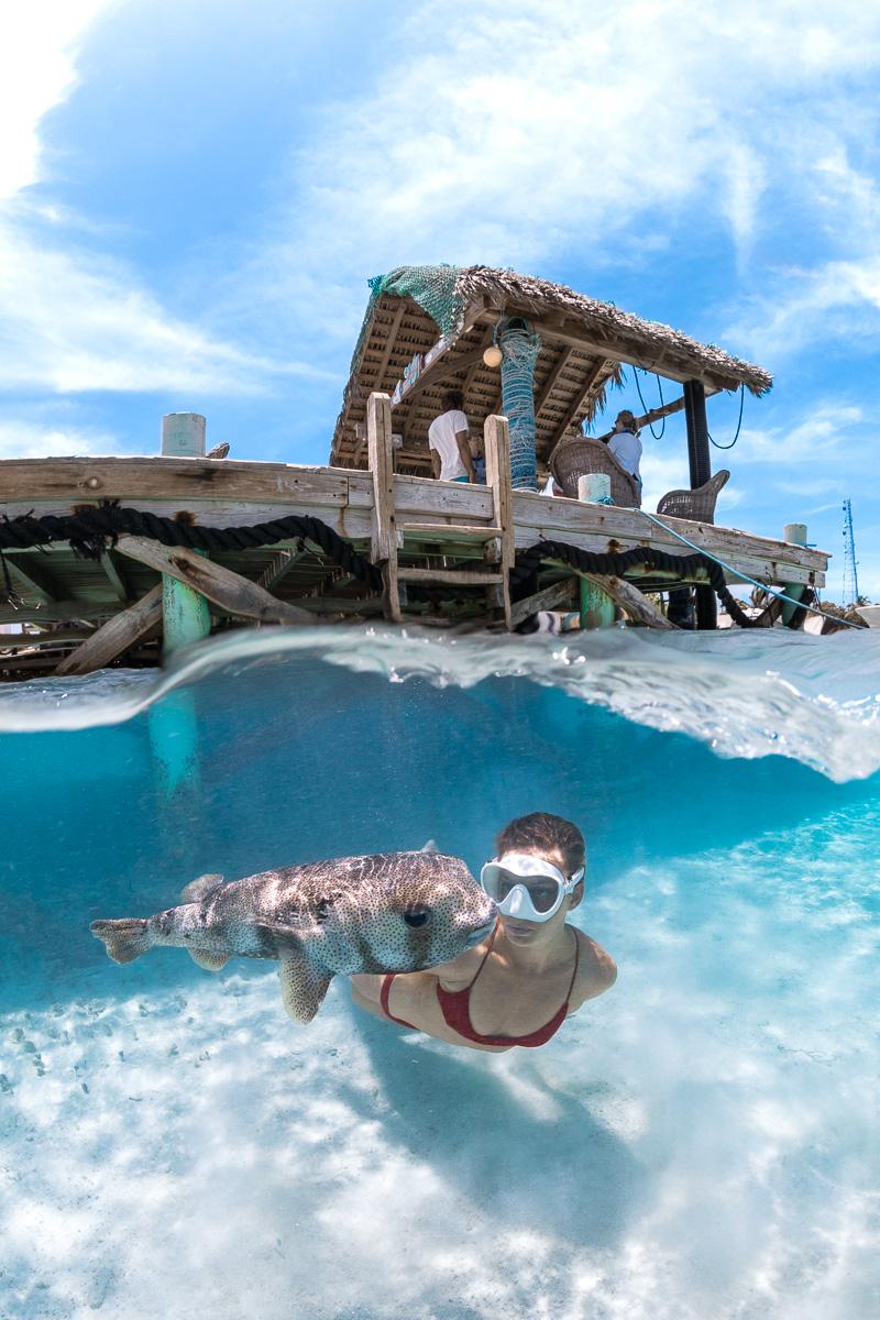 Swimming with Pufferfish underwater