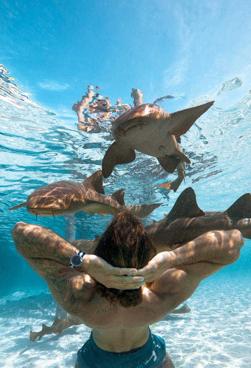 Nurse Shark at Staniel Cay Exuma ad
