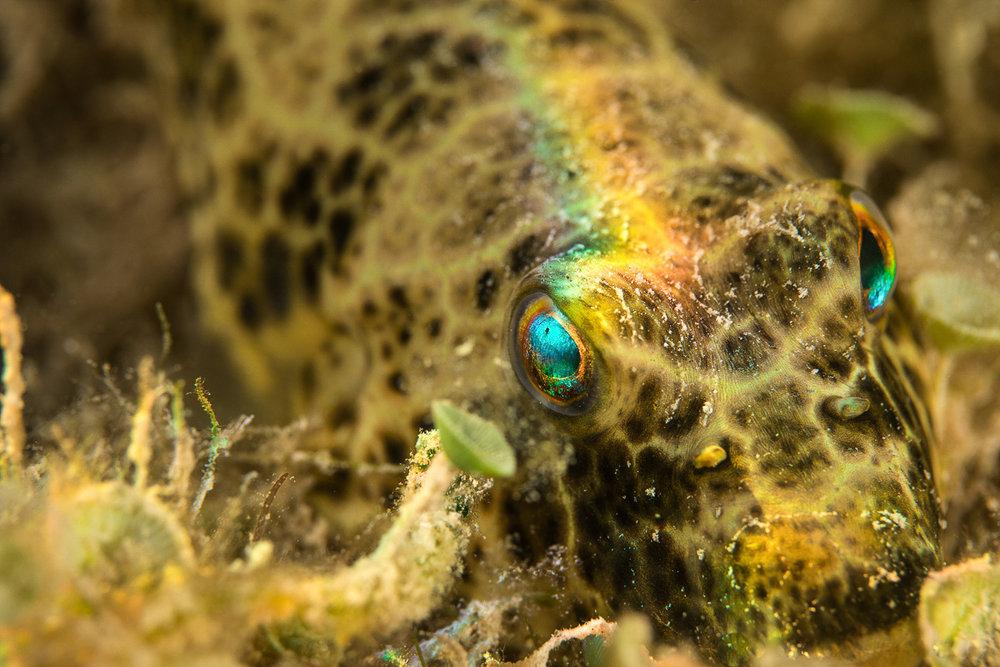 Marine wildlife.jpg