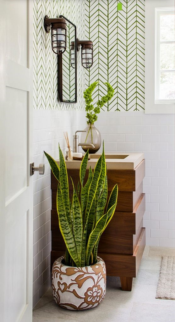 bathroom plants.jpg