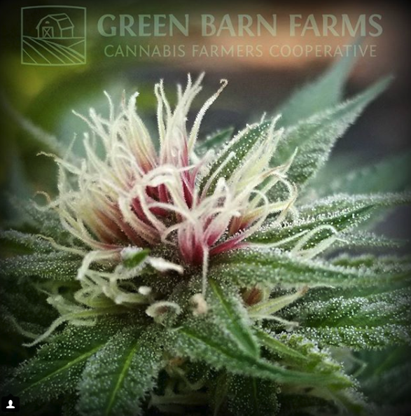Meet Green Barn Farms - RedmondMonday 11.20 4-7pmFremontWednesday 11.22 4-7pm