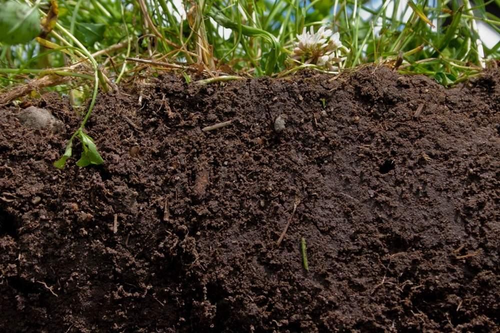 soil-header-1.jpg