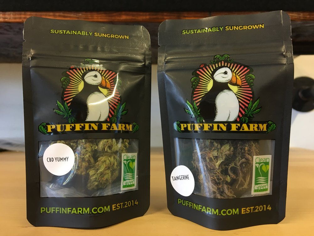 Hashtag Cannabis featuring Puffin Farms CBD Yummy and Tangerine Weed Strains