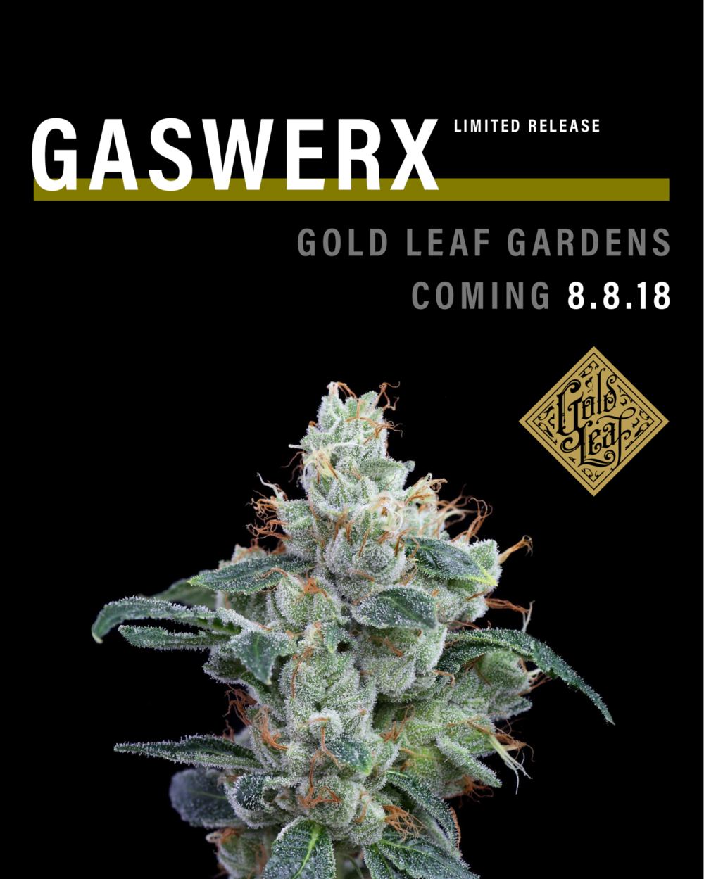 Gaswerks by Gold Leaf Gardens in Lacey Washington