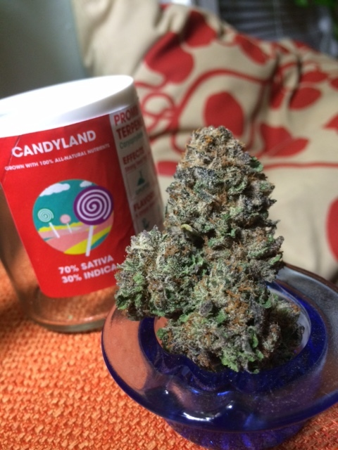 Candyland by Sweetwater Farms.JPG