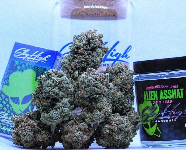 Goof around with Alien Asshat. - This hybrid from Sky High Gardens launches off with a euphoric blast followed by a social cerebral stoney high, great for goofing with friends or solo!