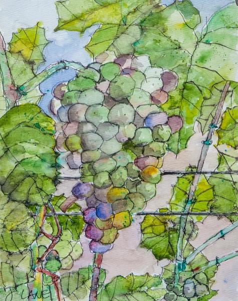 Brenda's Grapes by John Lane | $140