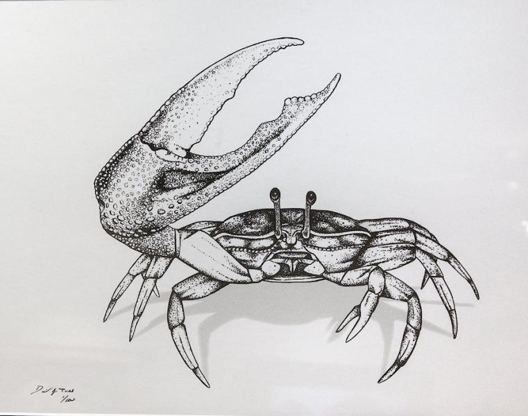 Fiddler Crab by David J. Tuss | $55
