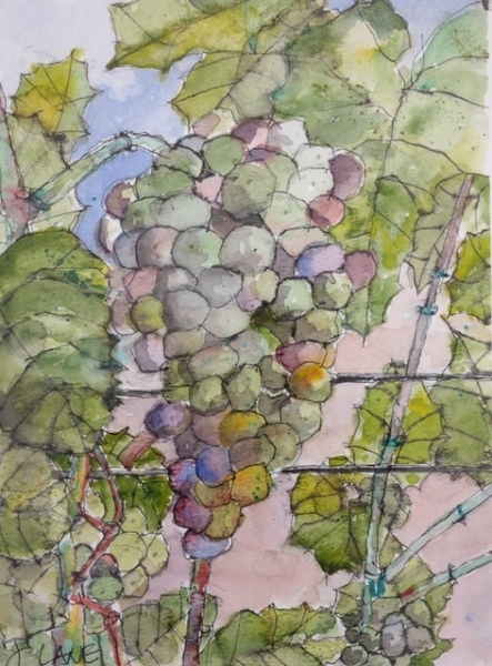 Brenda's Grapes by John Lane (Watercolor) | $140