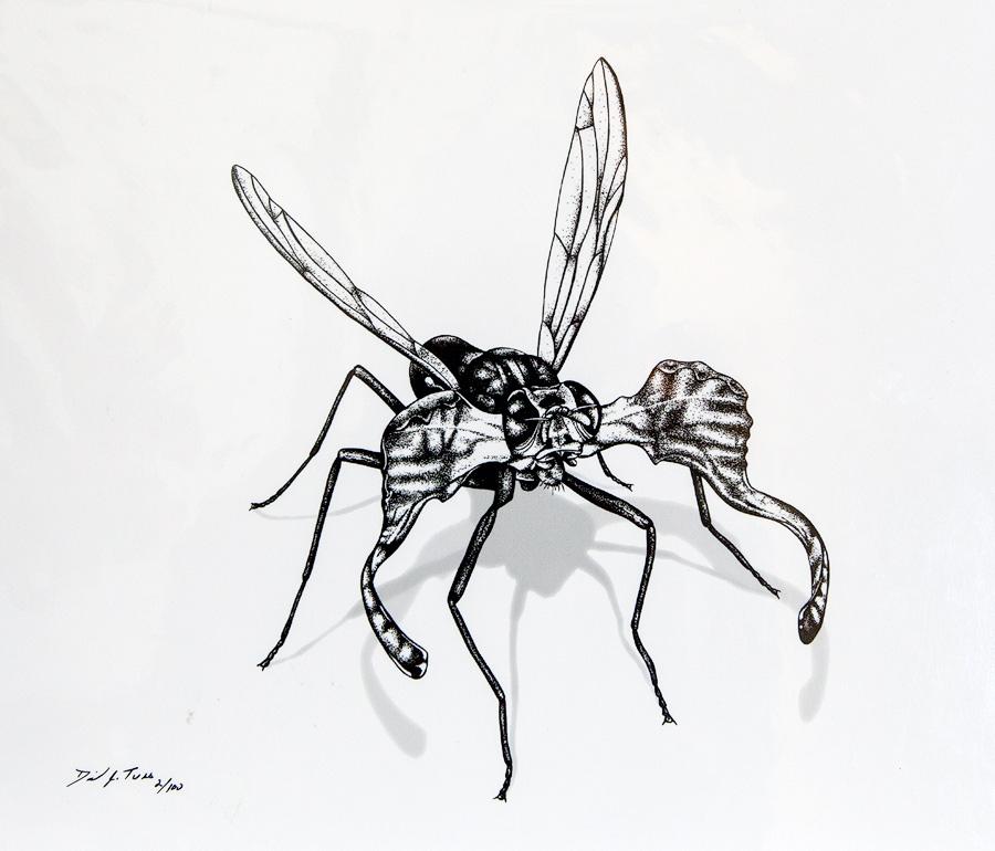 Moose Fly
