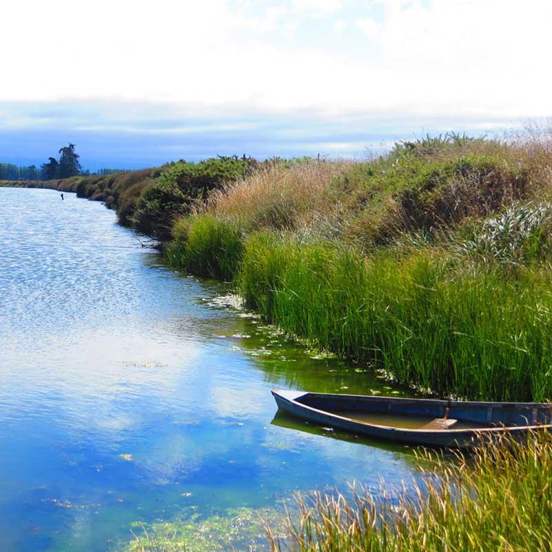 Oliver-Wainono-Lagoon.jpg