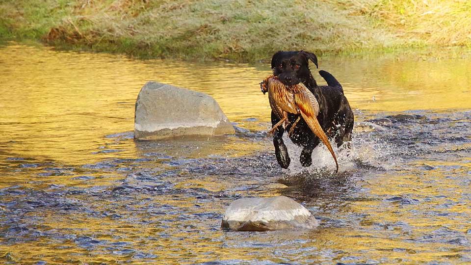 Hunting in Waimate