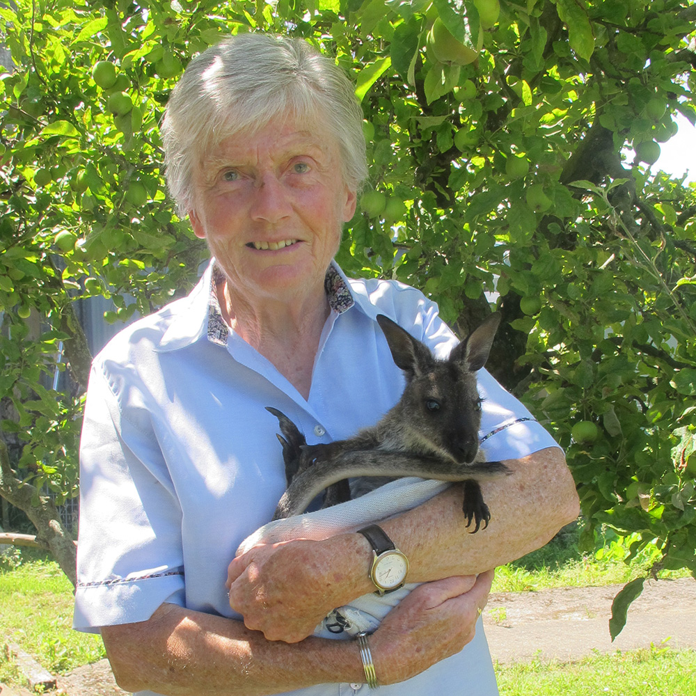 Our most popular attraction with overseas tourists - you can hand feed wallabies at the Tame Wallaby Park ….. learn more  here