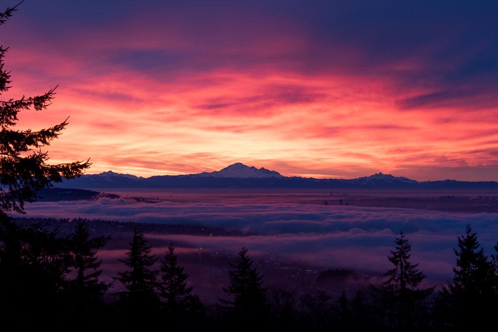 Sunrise Cypress.jpg