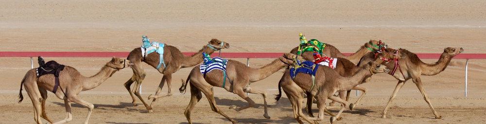 - UAE IN PHOTOGRAPHS