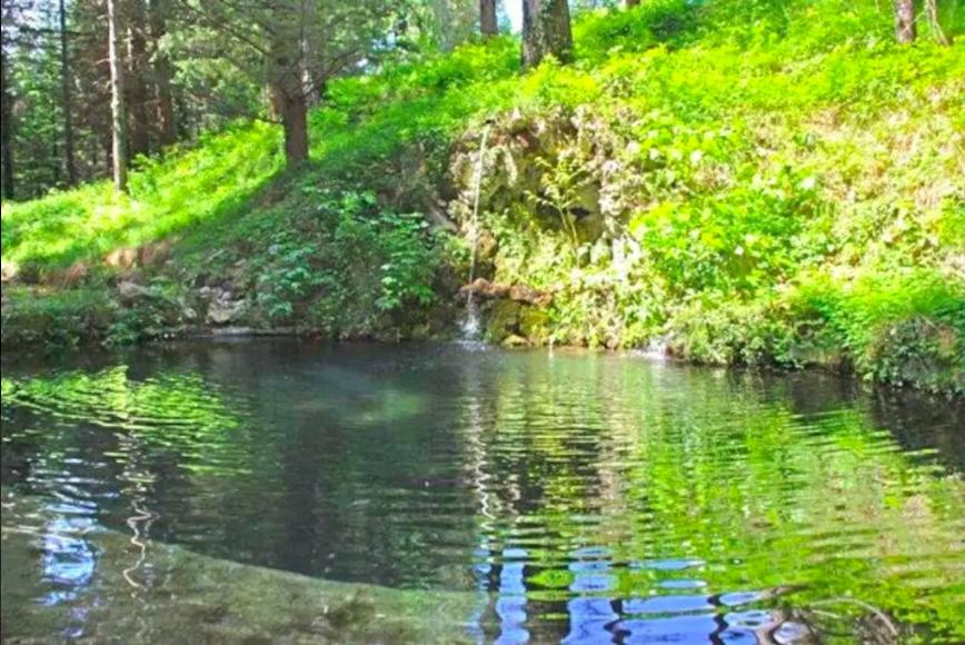 Garden pool of Villa Domme