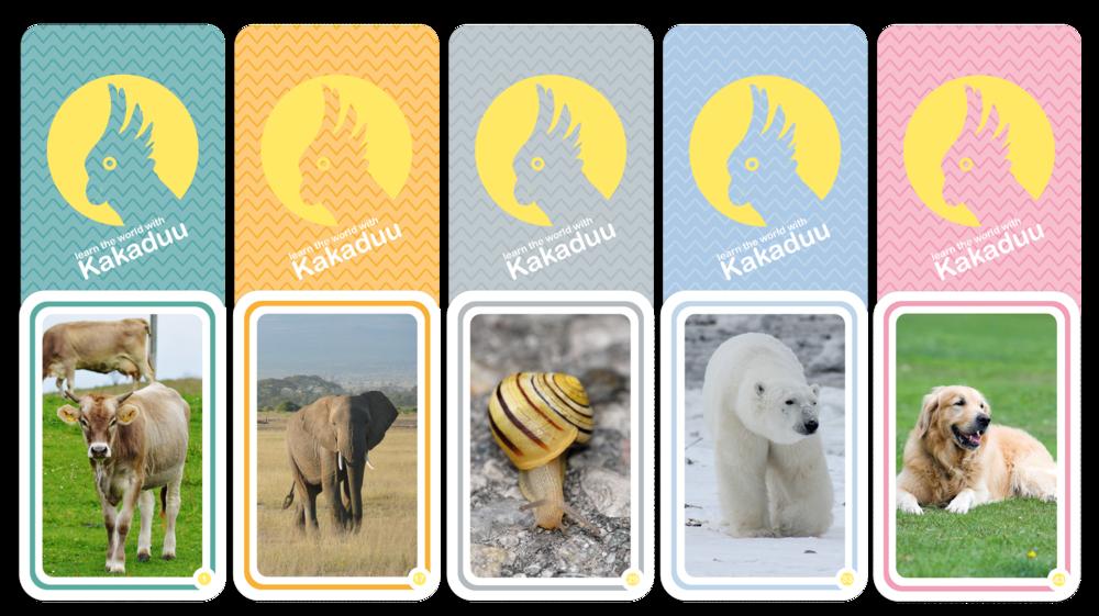 Behalte den Überblick - Unsere Karten sind jeweils in 5 Farbkategorien unterteilt. Somit können unsere Kleinen Kategorie für Kategorie erlernen, ohne dabei überfordert zu werden.