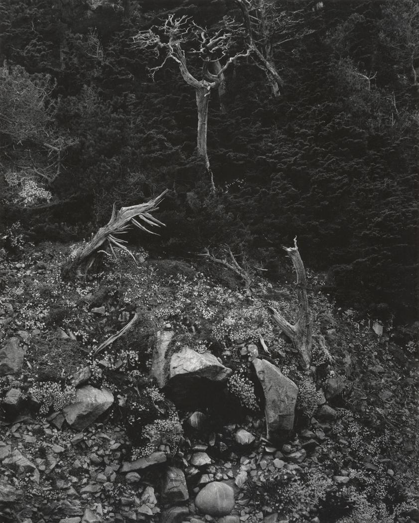 New Publication - Edward WestonFiftieth Anniversary Portfolio