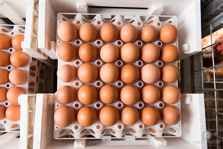 Fili-West Farms:  A Chicken and Egg Story about Cleaner, Greener Farming in Charleston, SC